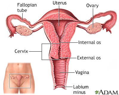 Vaginal itching and discharge - Adult and adolescent