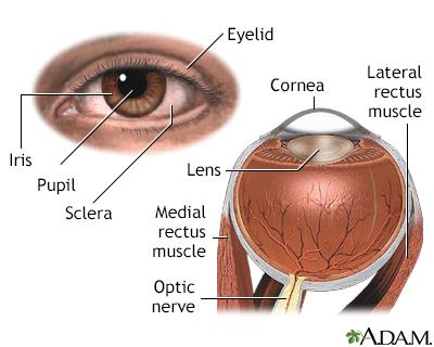 Vision Night Blindness