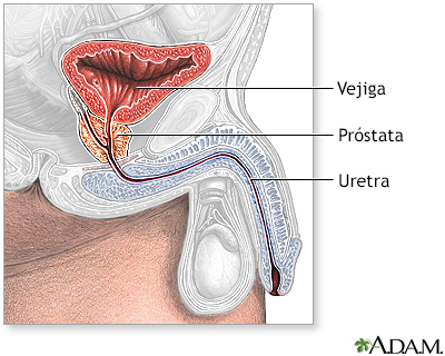 real prostate massage eskortepike definisjon