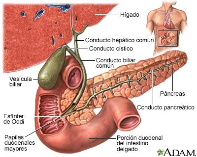Gammagrafía de la vesícula biliar con radionúclidos
