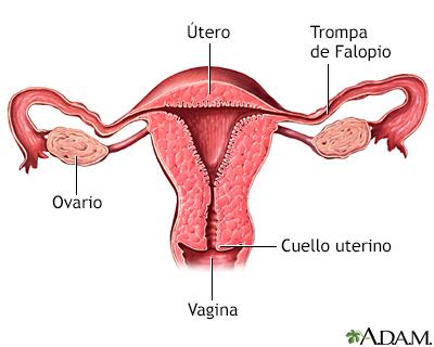 Quistes vaginales